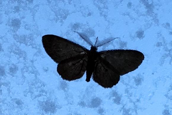 moth_7154