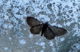 moth_7156